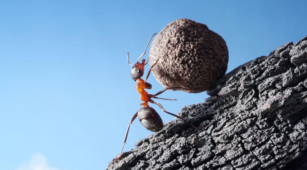 Små SEO-insatser kan ge stora resultat, demonstreras som en myra som kämpar med att rulla en sten uppför en kulle.